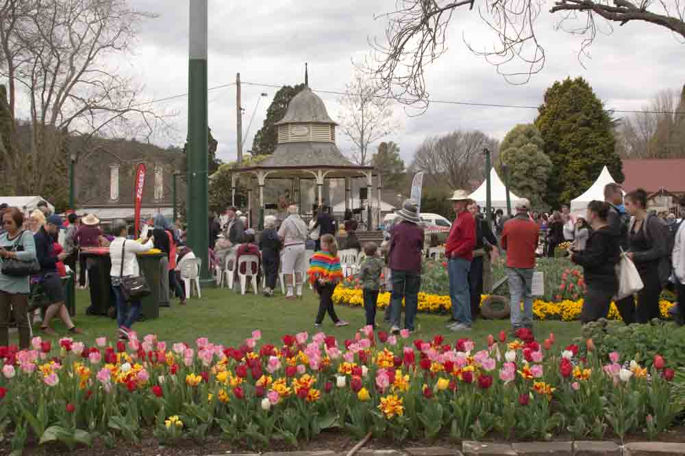 Bowral Tulips
